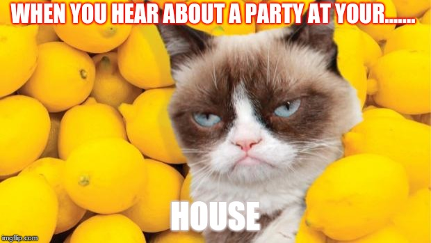 Grumpy Cat lemons | WHEN YOU HEAR ABOUT A PARTY AT YOUR....... HOUSE | image tagged in grumpy cat lemons | made w/ Imgflip meme maker