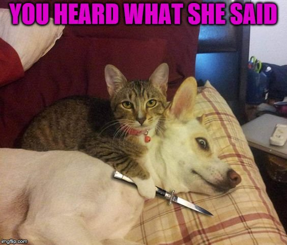 Cat knife Dog | YOU HEARD WHAT SHE SAID | image tagged in cat knife dog | made w/ Imgflip meme maker
