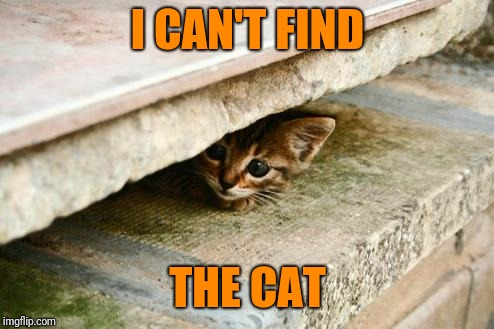 Hiding Cat | I CAN'T FIND THE CAT | image tagged in hiding cat | made w/ Imgflip meme maker