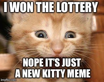 Excited Cat Meme Imgflip