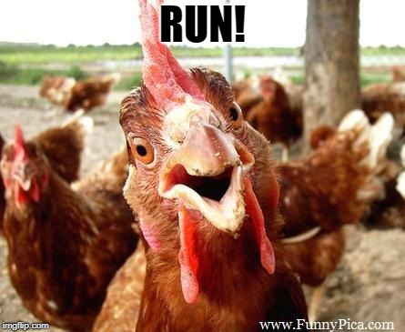 Chicken | RUN! | image tagged in chicken | made w/ Imgflip meme maker