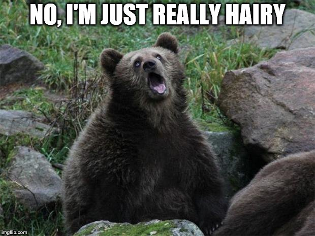 Sarcastic Bear | NO, I'M JUST REALLY HAIRY | image tagged in sarcastic bear | made w/ Imgflip meme maker