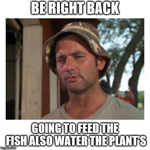 be right back | BE RIGHT BACK GOING TO FEED THE FISH ALSO WATER THE PLANT'S | image tagged in washroom,toilet,funny | made w/ Imgflip meme maker