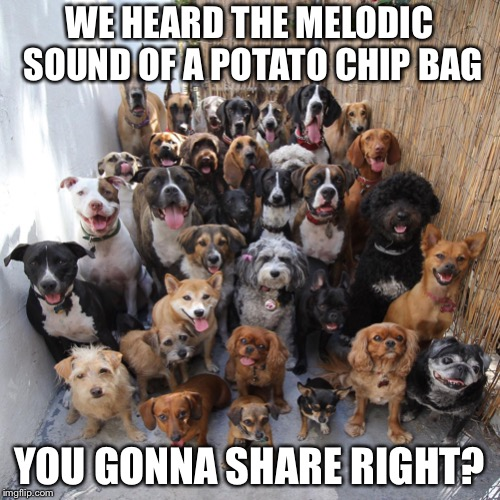 WE HEARD THE MELODIC SOUND OF A POTATO CHIP BAG YOU GONNA SHARE RIGHT? | image tagged in puppies | made w/ Imgflip meme maker