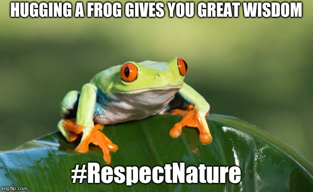 Hug the Frog | HUGGING A FROG GIVES YOU GREAT WISDOM #RespectNature | image tagged in frog,wisdomofthejungle | made w/ Imgflip meme maker