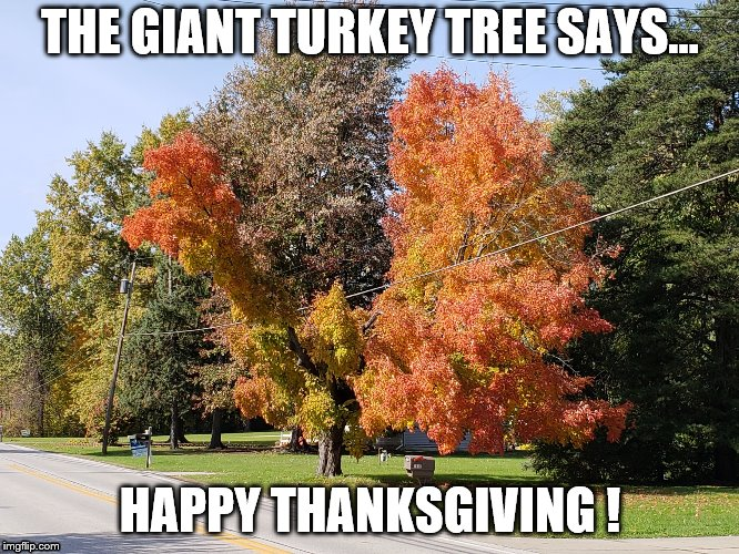 Giant Chicken Tree | THE GIANT TURKEY TREE SAYS... HAPPY THANKSGIVING ! | image tagged in giant chicken tree | made w/ Imgflip meme maker
