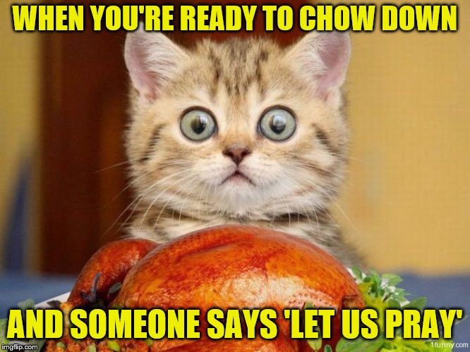 Makes me feel like a heathen. :-) |  WHEN YOU'RE READY TO CHOW DOWN; AND SOMEONE SAYS 'LET US PRAY' | image tagged in memes,cats,thanksgiving,funny,turkey,eyes wide | made w/ Imgflip meme maker