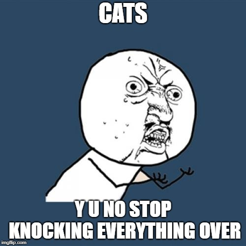 Y U No | CATS Y U NO STOP KNOCKING EVERYTHING OVER | image tagged in memes,y u no | made w/ Imgflip meme maker