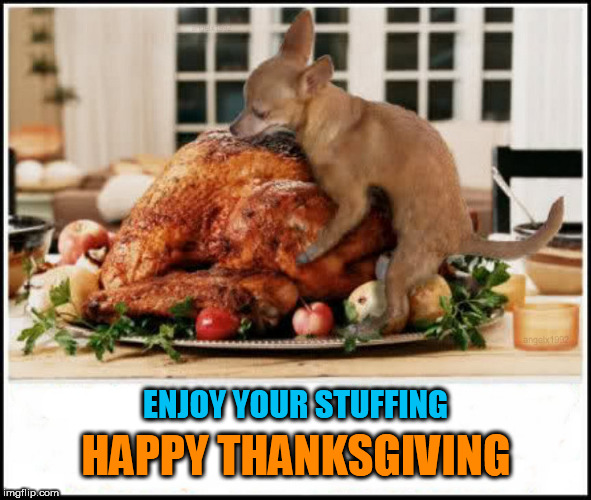 ENJOY YOUR STUFFING HAPPY THANKSGIVING | image tagged in thanksgiving,happy thanksgiving,thanksgiving dinner,hump,chihuahua,stuffing | made w/ Imgflip meme maker