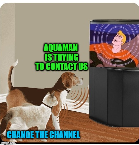 Telepathy miscall  | AQUAMAN IS TRYING TO CONTACT US CHANGE THE CHANNEL | image tagged in funny memes,aquaman,cat  dog,aquarium | made w/ Imgflip meme maker