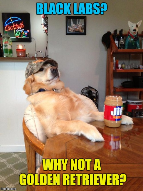 redneck dog | BLACK LABS? WHY NOT A GOLDEN RETRIEVER? | image tagged in redneck dog | made w/ Imgflip meme maker