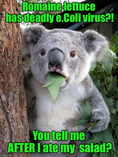 Now you tell me! | Romaine lettuce has deadly e.Coli virus?! You tell me AFTER I ate my  salad? | image tagged in memes,surprised koala,ecoli,romaine lettuce,salad | made w/ Imgflip meme maker