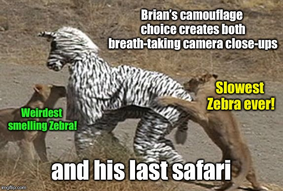 Choices determine outcomes | Brian's camouflage choice creates both breath-taking camera close-ups and his last safari Slowest Zebra ever! Weirdest smelling Zebra! | image tagged in zebra costume,lions,safari,irony,bad luck brian | made w/ Imgflip meme maker