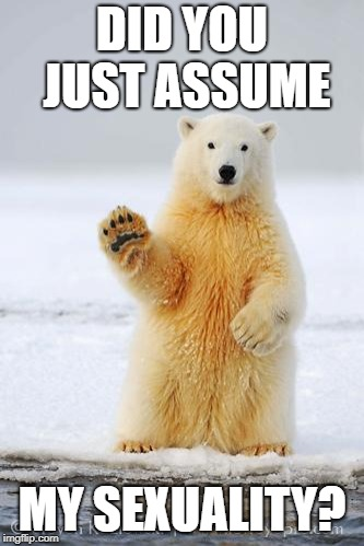 hello polar bear | DID YOU JUST ASSUME MY SEXUALITY? | image tagged in hello polar bear | made w/ Imgflip meme maker