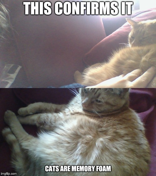 feline truth | THIS CONFIRMS IT CATS ARE MEMORY FOAM | image tagged in cats,memes,the truth | made w/ Imgflip meme maker