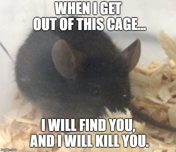 I Will Find You | WHEN I GET OUT OF THIS CAGE... I WILL FIND YOU, AND I WILL KILL YOU. | image tagged in mouse,cage,i will find you and kill you,i will find you,funny,creepy | made w/ Imgflip meme maker