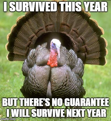 Turkey | I SURVIVED THIS YEAR BUT THERE'S NO GUARANTEE I WILL SURVIVE NEXT YEAR | image tagged in memes,turkey | made w/ Imgflip meme maker