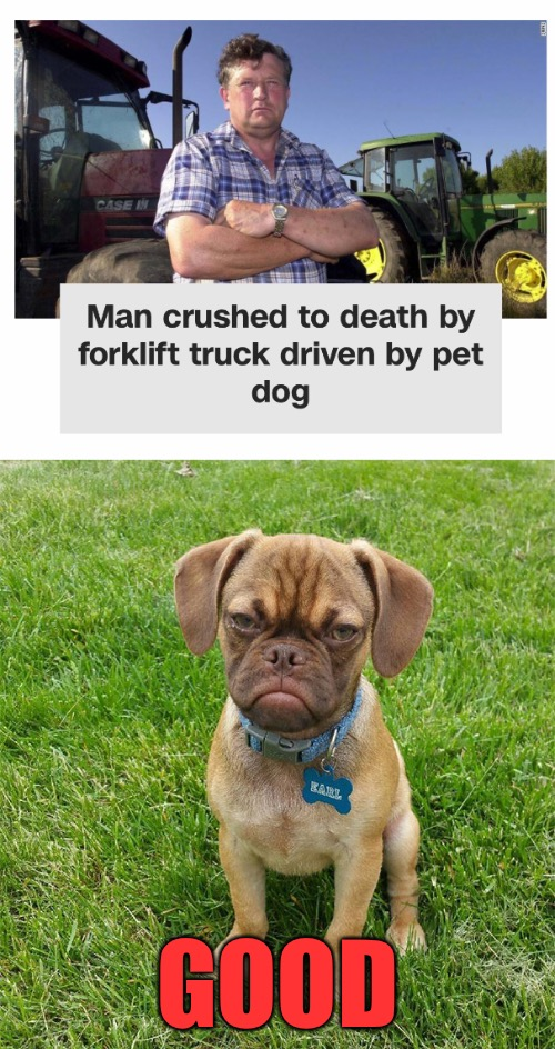 Grumpy Dog | GOOD | image tagged in memes,grumpy dog | made w/ Imgflip meme maker