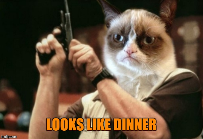 Grumpy cat | LOOKS LIKE DINNER | image tagged in grumpy cat | made w/ Imgflip meme maker