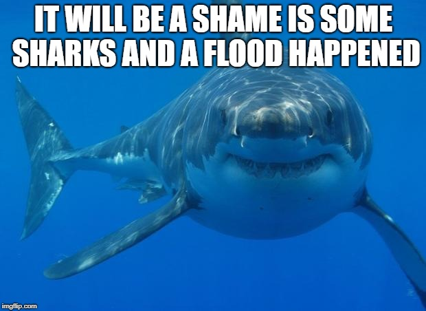 Straight White Shark | IT WILL BE A SHAME IS SOME SHARKS AND A FLOOD HAPPENED | image tagged in straight white shark | made w/ Imgflip meme maker