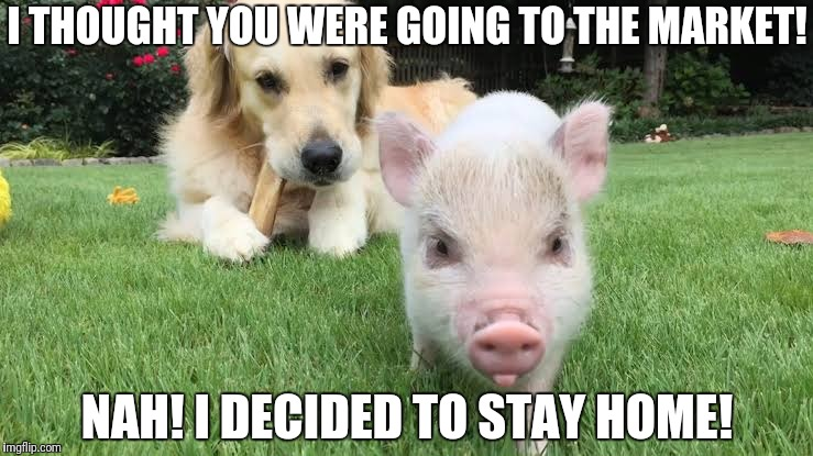 This little piggy! | I THOUGHT YOU WERE GOING TO THE MARKET! NAH! I DECIDED TO STAY HOME! | image tagged in this little piggy,this piggy stayed home,funny pig,funny dog | made w/ Imgflip meme maker