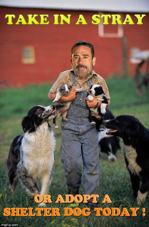 image tagged in the walking dead,negan,dogs,dog,puppies,walking dead | made w/ Imgflip meme maker