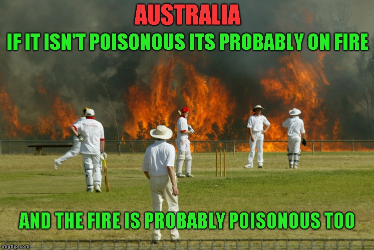Throw away submission. Upvoting it maybe be poisonous  | AUSTRALIA IF IT ISN'T POISONOUS ITS PROBABLY ON FIRE AND THE FIRE IS PROBABLY POISONOUS TOO | image tagged in australia,crickett | made w/ Imgflip meme maker