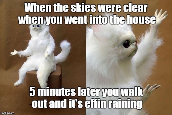 Persian Cat Room Guardian |  When the skies were clear when you went into the house; 5 minutes later you walk out and it's effin raining | image tagged in memes,persian cat room guardian | made w/ Imgflip meme maker