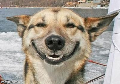 smiling dog | . | image tagged in smiling dog | made w/ Imgflip meme maker