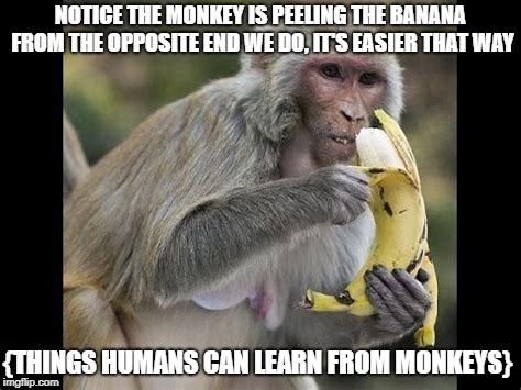 Monkeying Up The Memes Imgflip