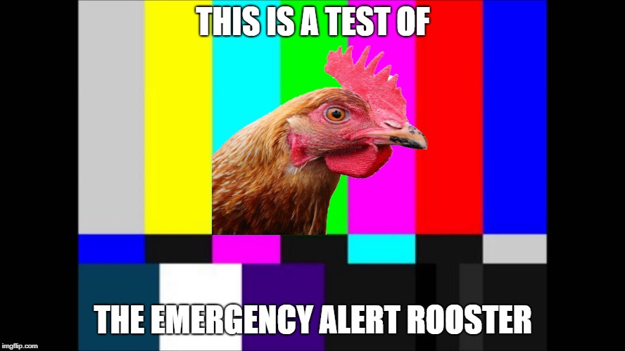 This is for all chickens | THIS IS A TEST OF THE EMERGENCY ALERT ROOSTER | image tagged in emergency broadcast,rooster,funny,alert system | made w/ Imgflip meme maker