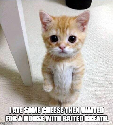 Cute Cat Meme | I ATE SOME CHEESE THEN WAITED FOR A MOUSE WITH BAITED BREATH. | image tagged in memes,cute cat | made w/ Imgflip meme maker