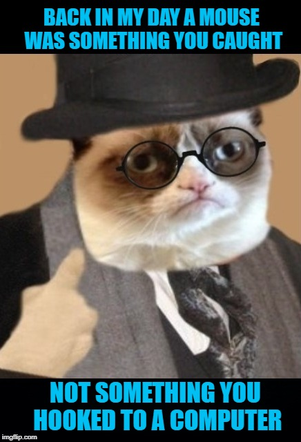 Image result for grumpy cat, harry potter
