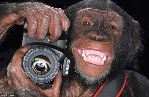 Camera Monkey | . | image tagged in camera monkey | made w/ Imgflip meme maker