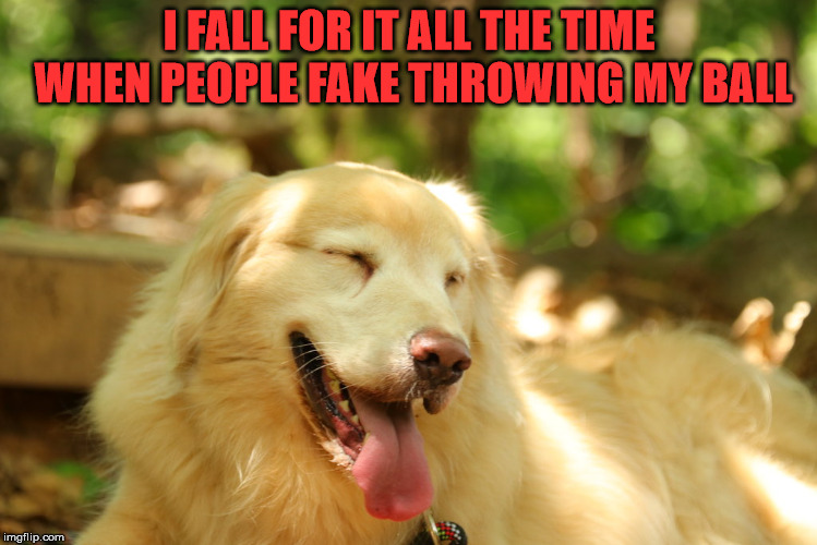 Dog laughing | I FALL FOR IT ALL THE TIME WHEN PEOPLE FAKE THROWING MY BALL | image tagged in dog laughing | made w/ Imgflip meme maker