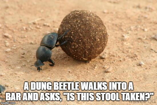 "Hard Working Dung Beetle | A DUNG BEETLE WALKS INTO A BAR AND ASKS, ""IS THIS STOOL TAKEN?"" 
