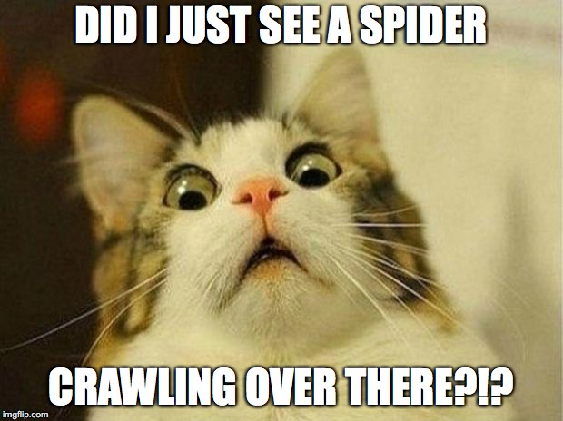 Scared Cat | DID I JUST SEE A SPIDER CRAWLING OVER THERE?!? | image tagged in memes,scared cat | made w/ Imgflip meme maker