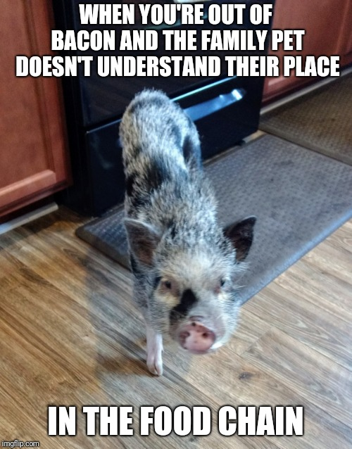 Out of bacon? | WHEN YOU'RE OUT OF BACON AND THE FAMILY PET DOESN'T UNDERSTAND THEIR PLACE IN THE FOOD CHAIN | image tagged in funny,funny memes | made w/ Imgflip meme maker
