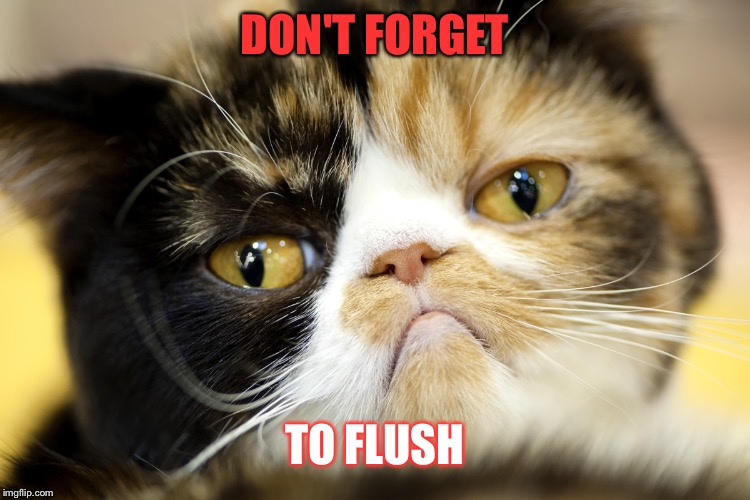 Grumpy Catico | DON'T FORGET TO FLUSH | image tagged in grumpy catico | made w/ Imgflip meme maker