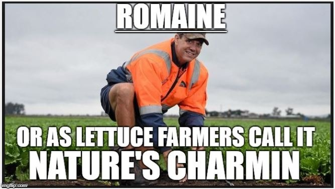 ________ | image tagged in romaine lettuce | made w/ Imgflip meme maker