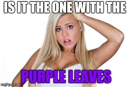 Dumb Blonde | IS IT THE ONE WITH THE PURPLE LEAVES | image tagged in dumb blonde | made w/ Imgflip meme maker