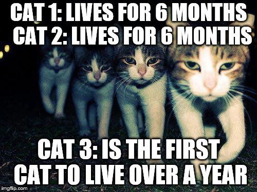 Wrong Neighboorhood Cats | CAT 1: LIVES FOR 6 MONTHS  CAT 2: LIVES FOR 6 MONTHS CAT 3: IS THE FIRST CAT TO LIVE OVER A YEAR | image tagged in memes,wrong neighboorhood cats | made w/ Imgflip meme maker