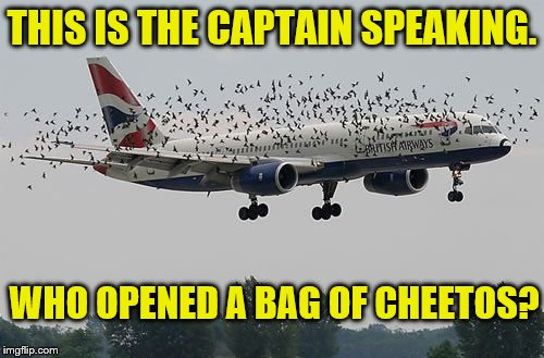It's a bird... It's a plane... | THIS IS THE CAPTAIN SPEAKING. WHO OPENED A BAG OF CHEETOS? | image tagged in memes,plane surrounded by birds,birds go cray cray over cheetos,funny | made w/ Imgflip meme maker