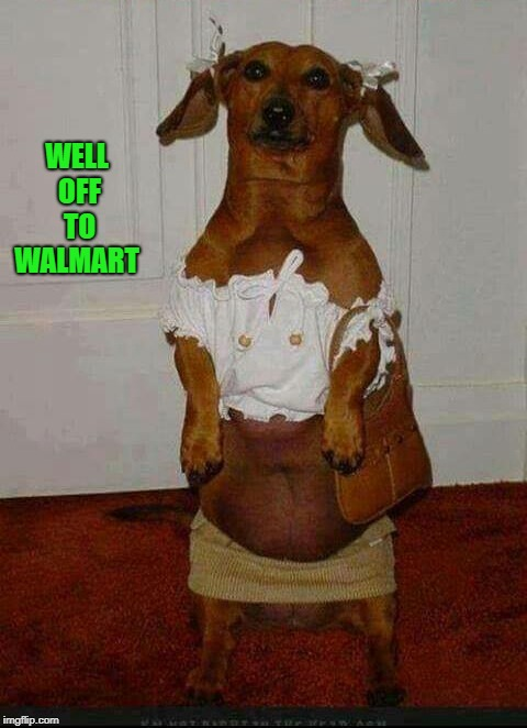 walmart people | WELL OFF TO WALMART | image tagged in weiner dog,walmart | made w/ Imgflip meme maker