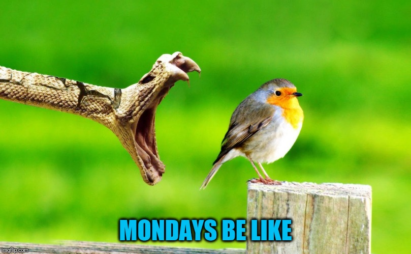 Whether it's the mortgage payment or a class project... | MONDAYS BE LIKE | image tagged in poor bird | made w/ Imgflip meme maker