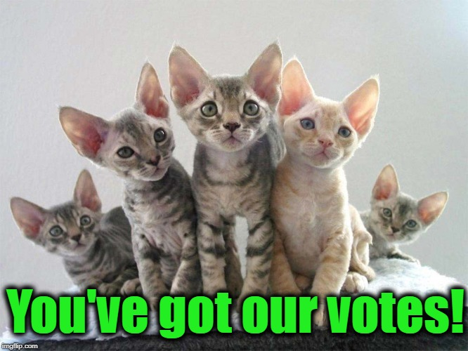 You've got our votes! | made w/ Imgflip meme maker