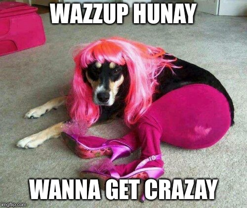 Sexy dog pose | WAZZUP HUNAY WANNA GET CRAZAY | image tagged in sexy dog pose | made w/ Imgflip meme maker