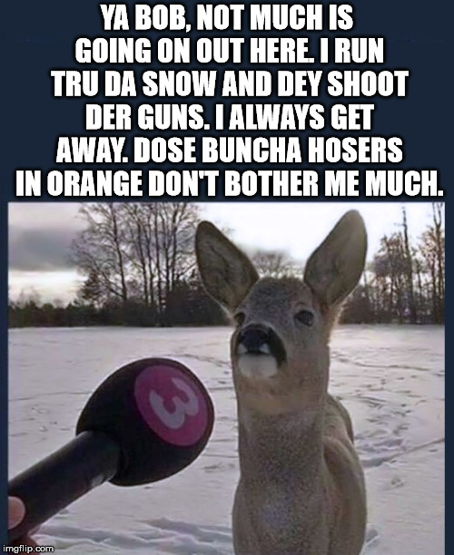 Deer interviewed during hunting season. | YA BOB, NOT MUCH IS GOING ON OUT HERE. I RUN TRU DA SNOW AND DEY SHOOT DER GUNS. I ALWAYS GET AWAY. DOSE BUNCHA HOSERS IN ORANGE DON'T BOTHE | image tagged in memes,whitetail deer,hunting season,interview,funny,shooting | made w/ Imgflip meme maker