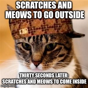 Scumbag Cat | SCRATCHES AND MEOWS TO GO OUTSIDE THIRTY SECONDS LATER: SCRATCHES AND MEOWS TO COME INSIDE | image tagged in scumbag cat,AdviceAnimals | made w/ Imgflip meme maker