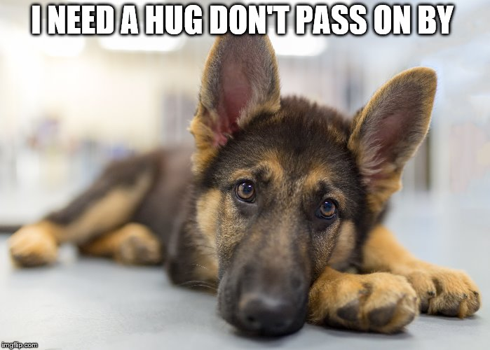 I need a hug | I NEED A HUG DON'T PASS ON BY | image tagged in pet,dog,puppy,hug,cute puppies,cute animals | made w/ Imgflip meme maker
